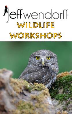 Jeff Wendorff's Wildlife Workshops