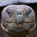 Denizens of the Galapagos Islands