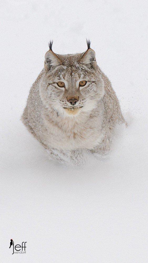 Lynx Gallery Winter Wildlife Photography Workshop