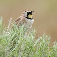 Bird Photography Antelope Island Utah