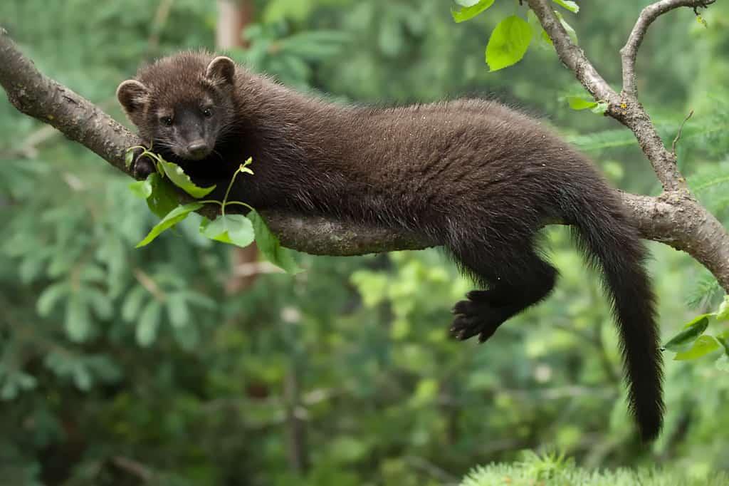 Wildlife Photography  ...