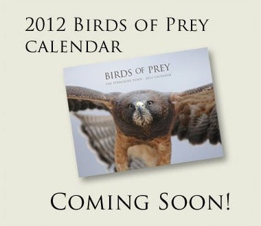 Peregrine Fund 2012 Cover Image