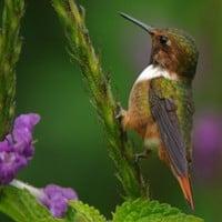 Top 10 Bird Photographs from 2011