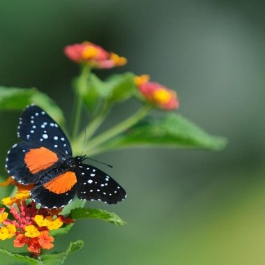 Bees and Butterflies from Costa Rica