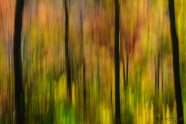 Fall Forest Abstract