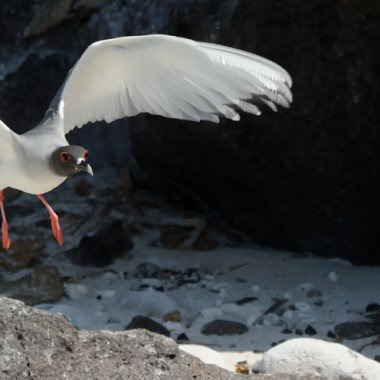 Photographing the Galapagos – Gulls