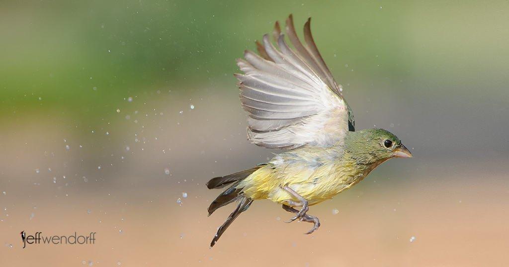 Texas Bird Photography Workshop Review