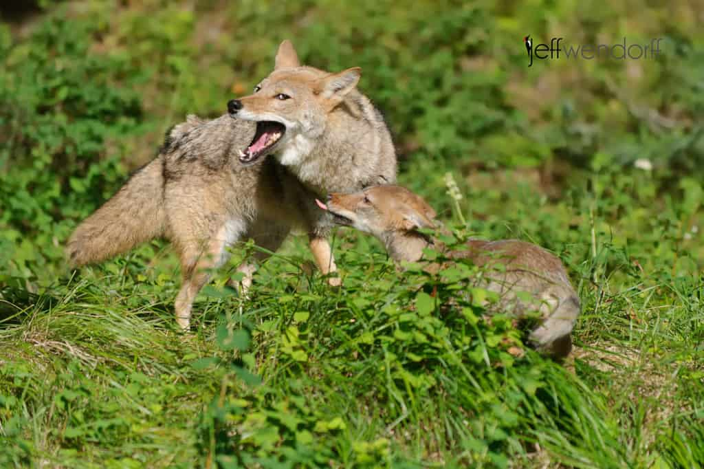 Baby Wildlife Photography Workshop 2013 in Review | Jeff ...