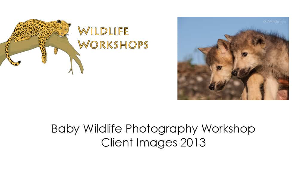 Baby Wildlife Photography Workshop Client Images