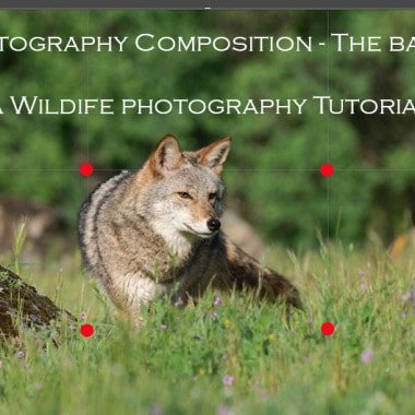 Photography Composition – The Basics