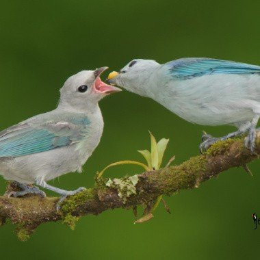 Bird Photography – Tanager Portfolio