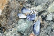 Mussel Shells - Glacier Bay Alaska photographed by Jeff Wendorff