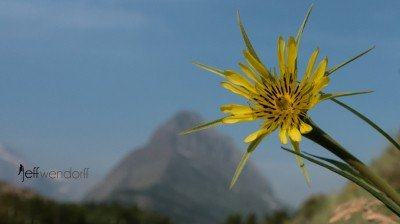 Wildflower Photography Glacier Park