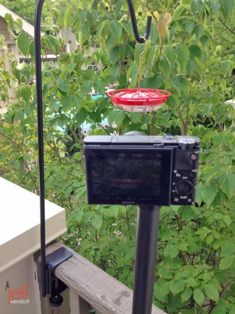 Jeff Wendorff's Sony RX-100 setup for hummingbird videography