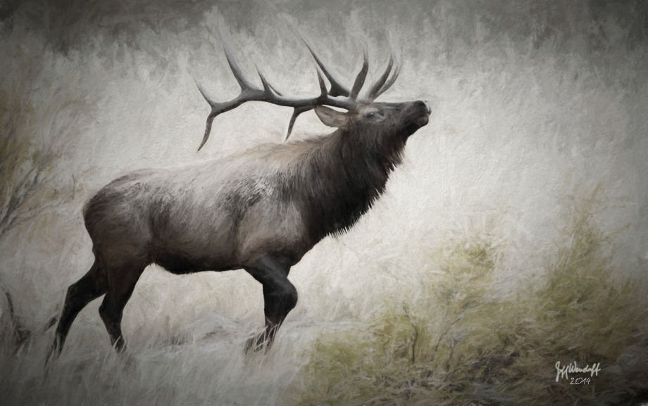 Elk photographed painted with Topaz Impression by Jeff Wendorff