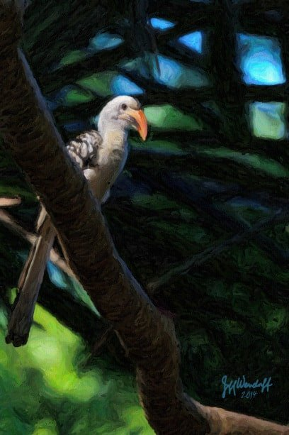 In the Canopy - Red-billed Hornbill created from a photograph by Jeff Wendorff