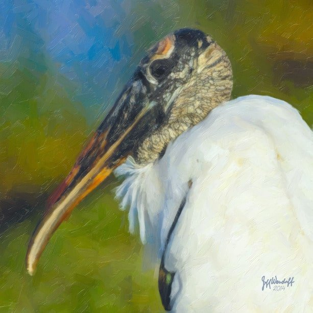 Woodstork Portrait created from a photograph by Jeff Wendorff