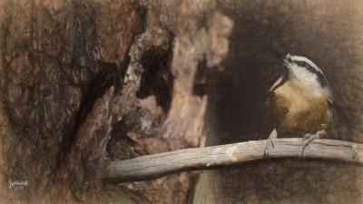 Creating Art from Photography – Bird Art