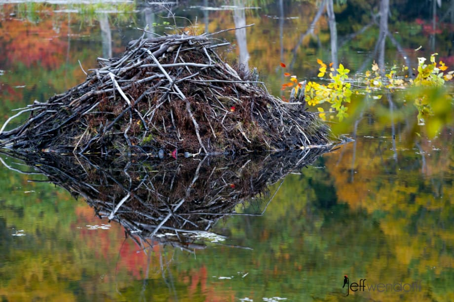 A Vermont beaver pond in the fall photographed by Jeff Wendorff