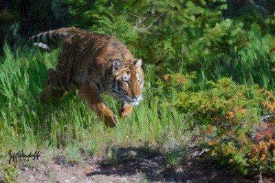 Creating Art from Photography – Wildlife Art