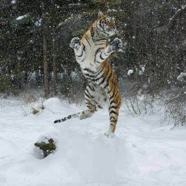 Client Images Winter Wildlife Workshop 2015
