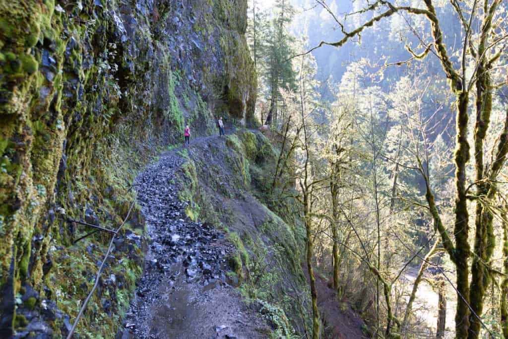 A precipitous trail on the Eagle Creek trail...sheer fall off along this section of the trail photographed  by Jeff Wendorff