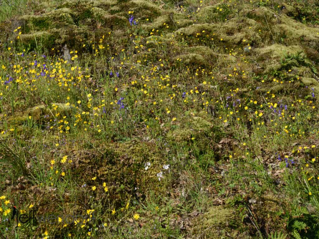 Wildflowers along the trail at Catherine's Creek photographed by Jeff Wendorff