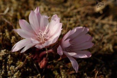 Washington Wildflowers – Catherine Creek 3