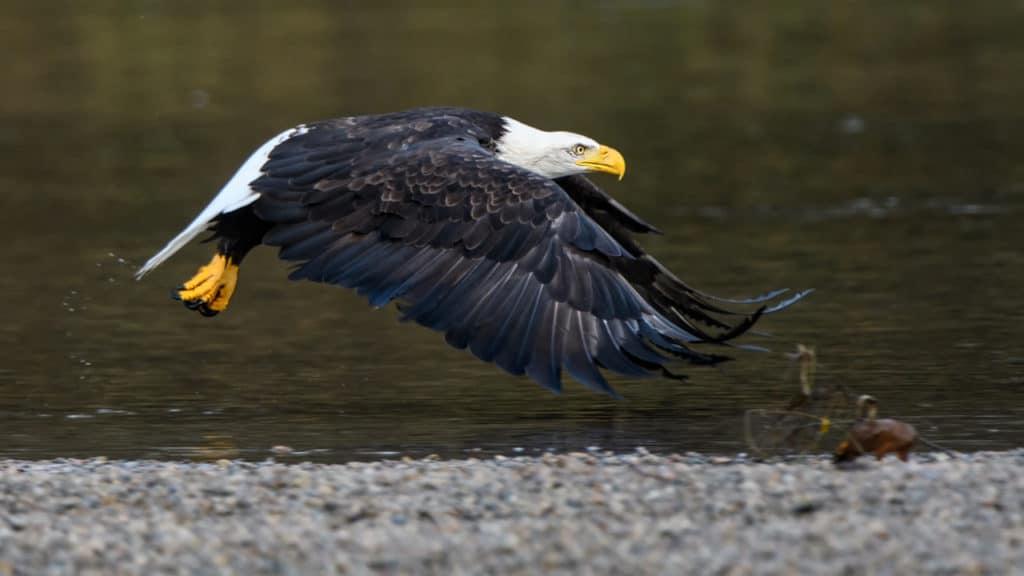 New Bird Photography Workshop