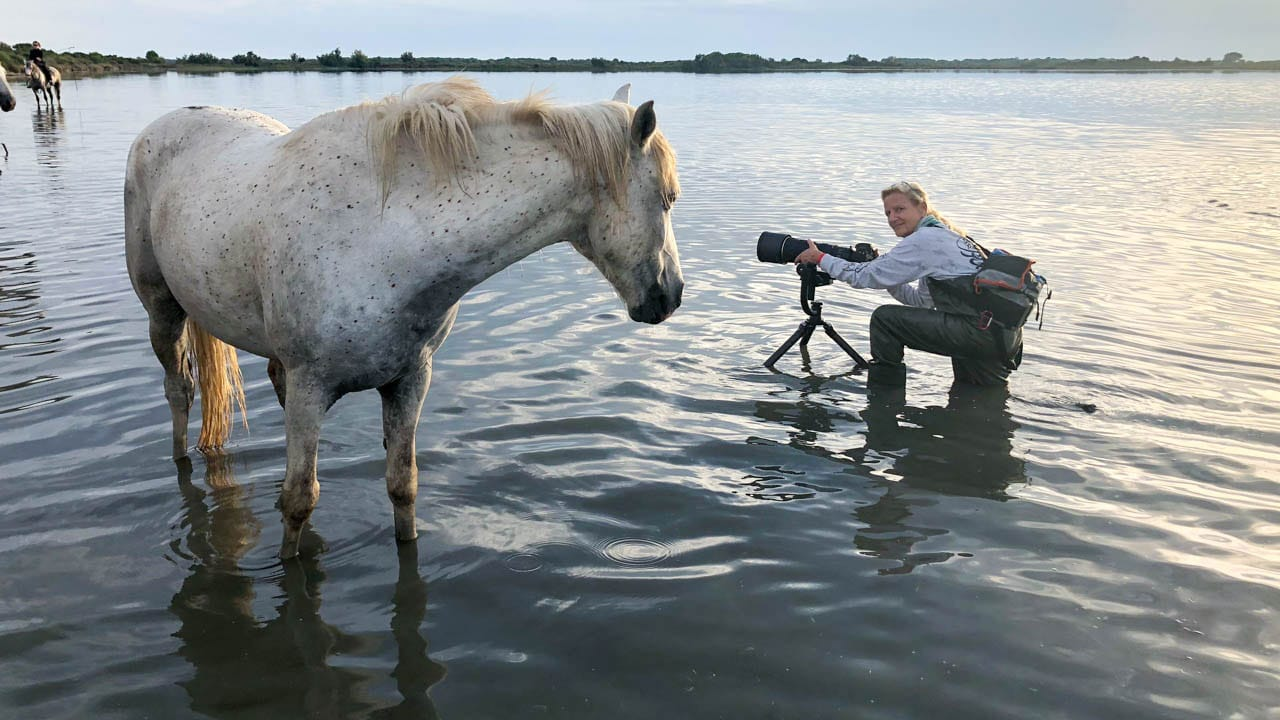 Camargue white horse eyes photographer