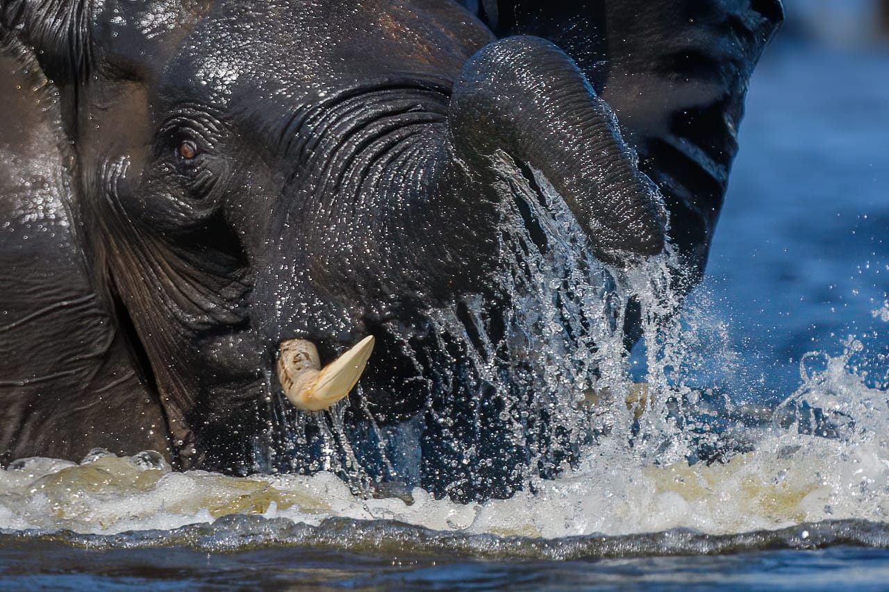 Elephant in water Jeff Wendorff