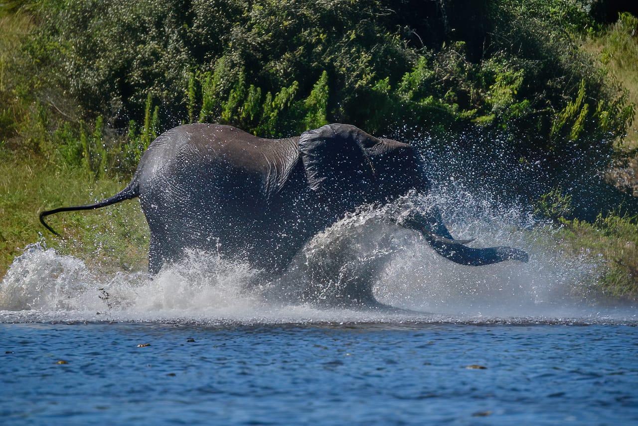 Elephant splashing in Chobe River Jeff Wendorff