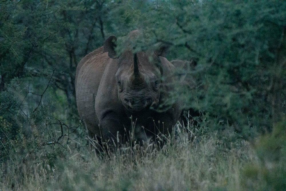 Rhino After DeNoise AI