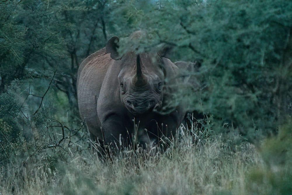 Rhino Before DeNoise AI