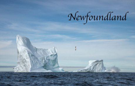 Calving Iceberg Newfoundland Photography Workshop