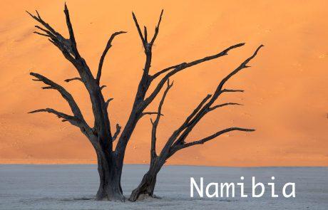 Petrifeid Tree Namibia Photo Workshop